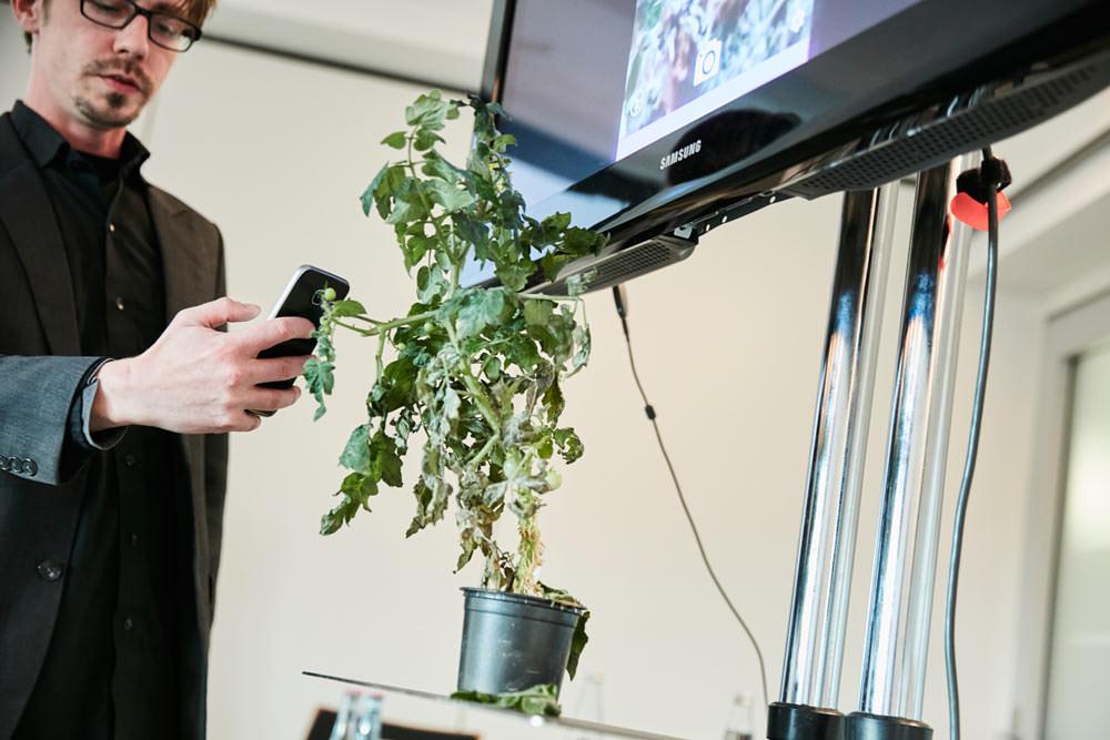 Plantix App zur Krankheitenerkennung bei Pflanzen